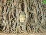 Hlava Buddhy v kořenech stromu Aytthaya