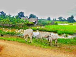 Venkov Kambodža