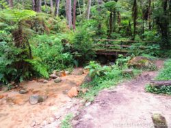 Cameron Highland procházka džunglí