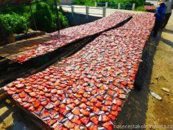 Sušené ryby v Kambodže