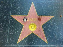 Hvězda na chodníku slávy